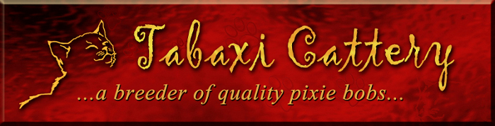 Tabaxi Cattery's logo